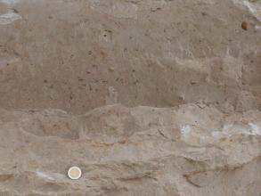 """Fossilreiche Quaderkalke auch als """"Tuttlinger Marmor"""" bezeichnet."""