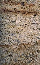 Gesteinsplatte aus sehr grobem Gestein mit vielen Hohlräumen, welche an einen Schwamm erinnern. Das Gestein ist beige bis bräunlich.
