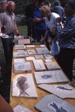 Auf einem Holztisch sind mehrere Fundstücke von Fossilien, eingebacken in Gestein, ausgelegt. Interessierte Betrachter umstehen den Tisch.