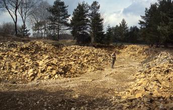 Das Foto zeigt mehrere Hügel von gelblichem, plattigem Gesteinsbruch. Dazwischen verläuft ein unbefestigter Weg, auf dem ein Mann steht. Im Hintergrund einzelne Nadel- und kahle Laubbäume.