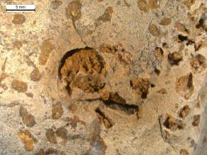 Nahaufnahme von teils glattem, teils löchrigem Gestein. Die größte Öffnung befindet sich links der Bildmitte; es ist mit glitzerndem, orangefarbenem Material gefüllt. Im übrigen, hellbraunen Gestein sind zudem dunklere Einschlüsse erkennbar.