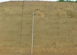 Blick auf eine hohe, gelblich braune Lösswand. Links der Bildmitte ist eine Messlatte an die Wand gelehnt.