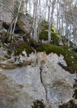 Das Bild zeigt einen felsigen Steilhang. Moos und einzelne schlanke Bäume wachsen am oberen Hangrand.