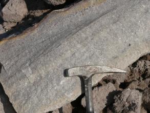 Nahaufnahme einer schräg liegenden, hellgrauen Gesteinsplatte. Links oben ist die Kante wellenförmig gerundet. Rechts zeigt der Kopf eines Hammers die Größe an.