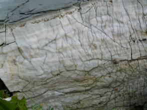 Das Bild zeigt weißlichgraues bis grünliches Gestein mit einem feinadrigen Netz aus Rissen. Rechts dient eine kleine Schnecke als Größenvergleich..