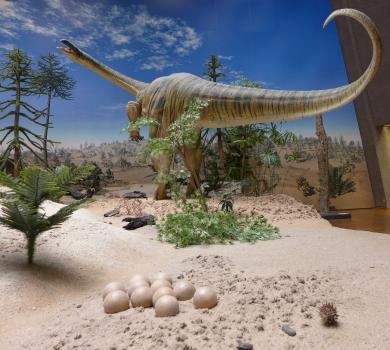 Das Bild zeigt das Modell eines großen Dinosauriers in einer sandigen Dünenlandschaft mit wenigen Bäumen und Pflanzen. Das Tier hat einen langen Hals und einen noch längeren Schwanz. Im Vordergrund sind Eier ausgelegt.