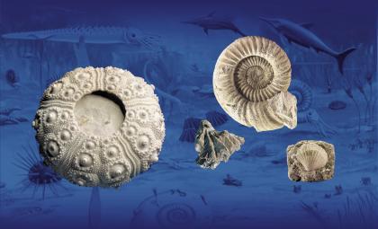 Das Bild zeigt verschiedene versteinerte Fundstücke: eine Muschel, einen urzeitlichen Kopffüßer mit spiralförmigem Gehäuse und Korallen. Die Fundstücke scheinen vor einem blau gefärbten Hintergrund zu schweben.