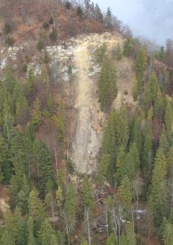 Zu sehen ist ein steiler, bewaldeter Hang. Am oberen Teil des Hanges scheint heller Fels hervor. In der Mitte des Bildes ist ein Teil des Hanges abgerutscht, helles Material kommt zum Vorschein. In diesem Bereich stehen auch keine Bäume mehr.