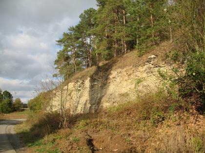Blick auf einen nach links abfallenden, gelbbraunen Gesteinshang, der unten mit Gebüsch und oben mit Nadelbäumen bewachsen ist.
