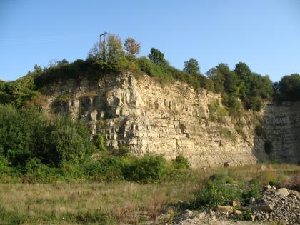 Das Bild zeigt eine von Buschwerk, Gras und Bäumen eingerahmte, nach rechts abgeknickte Steinbruchwand. Das Gestein ist hellbraun gefärbt.