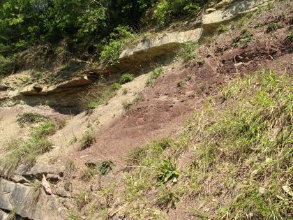Das Bild zeigt einen leicht nach rechts ansteigenden, teilweise bewachsenen Hang. Das dazwischen sichtbare Gestein ist rechts rötlich braun, links und oben gelblich.