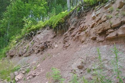 Das Bild zeigt eine im oberen Teil gesteinsreiche Hangböschung unter Wald. Das Gestein ist rötlich grau und teilweise verwittert.