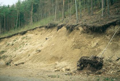 Das Bild zeigt die Abbruchkante eines von rechts nach links abfallenden, bewaldeten Hanges. Der blanke, teilweise abgerutschte Boden hat eine gelblich braune Farbe.
