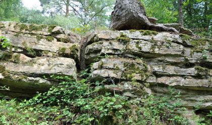 Das Bild zeigt mehrere aufeinanderliegende, flache Gesteinstafeln. Rechts oben sitzt ein Baumstamm auf dem teils bemoosten Gestein. Im Vordergrund wuchern Pflanzen, im Hintergrund steht Wald.