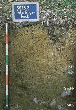 Das Foto zeigt ein Bodenprofil unter Wald. Es handelt sich um ein Musterprofil des LGRB. Das fünf Horizonte umfassende Bodenprofil ist etwa 80 cm tief.
