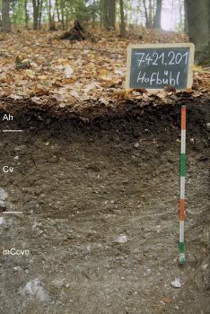 Das Foto zeigt ein Bodenprofil unter Wald. Es handelt sich um ein Musterprofil des LGRB.