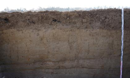 Das Bild zeigt den oberen Teil eines Bodenprofils. Ein Bewuchs oben ist nicht erkennbar. An dem dunkelbraunen Profil ist rechts ein Maßband angelehnt.