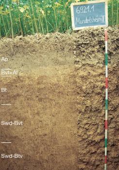Das Bild zeigt ein Bodenprofil unter Ackerpflanzen. Es handelt sich um ein Musterprofil des LGRB. Das in fünf Horizonte gegliederte Profil ist 1,40 m tief.