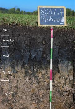 Das Foto zeigt ein Bodenprofil unter Grünland. Es handelt sich um ein Musterprofil des LGRB. Das fünf Horizonte umfassende, oben sehr dunkle und unten helle Profil ist fast 80 cm tief.