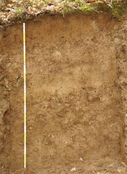 Blick auf ein gelblich braunes Bodenprofil. Das Profil ist 1,40 Meter tief. Am oberen Rand ist die Bodendecke sichtbar, sie trägt welkes Laub von Bäumen.