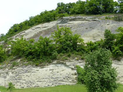 Blick auf eine steile, graugelb gefärbte Felswand, die in mittlerer Höhe von Bäumen bewachsen ist. Auf der Kuppe der Felswand stehen ebenfalls Bäume.