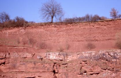 Blick auf eine rötlich gefärbte Steinbruchwand. Unterhalb der Bildmitte, über teils rissigen, lockeren Schichten, ist ein Streifen von weißlichem bis grauem Gestein zu erkennen. Die Kuppe des Bruchs ist mit Bäumen und Sträuchern bewachsen.