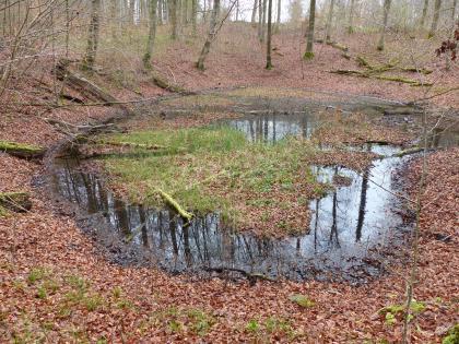In einer von totem Laub bedeckten Waldsenke hat sich eine ungleichmäßig gerundete Wasserfläche gebildet. Das Wasser ist teilweise mit weiterem Laub, aber auch mit Gras bedeckt.