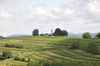 Blick auf hügelige, terrassierte Rebanlagen. Auf der Kuppe des Hügels steht ein metallener Aussichtsturm mit großer Plattform.
