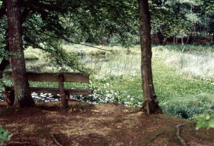 Im Bildmittelpunkt steht eine mit Schilf und anderen Wasserpflanzen umgrenzte Wasserfläche. Im Vordergrund ist ein erhöhter Aussichtspunkt mit Bäumen und einer Sitzbank zu sehen. Im Hintergrund steht dichter Wald.