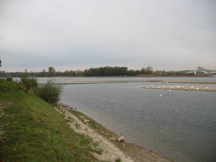 Linkes Ufer eines großen Flusses. Das Ufer ist befestigt und mit Gras bewachsen, im Fluss befinden sich Sandbänke. Im Hintergrund ist eine Baumgruppe und rechts eine Brücke zu erkennen.
