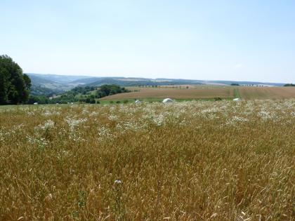 Hinter einem blühenden Getreidefeld zeigt sich links ein tiefes, an den Hängen bewaldetes Tal. Rechts schließen sich weitere, vom Betrachter wegführende wellige Ackerflächen an. Im Hintergrund verbindet sich eine flache, bewaldete Höhe mit dem Tal.