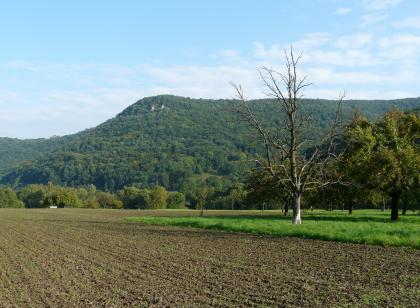 Das Bild zeigt einen schräg gefurchten Acker im Vordergrund. Rechts grenzt eine Wiese mit Obstbäumen an die Ackerfläche. Im Hintergrund erhebt sich ein von links steil ansteigender, nach rechts flacher verlaufender, bewaldeter Höhenzug.