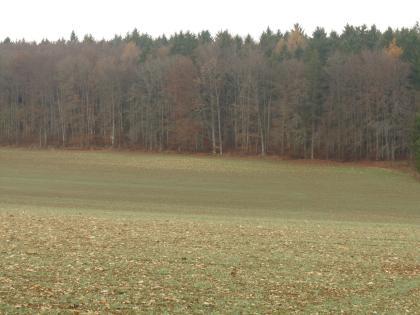 Das Bild zeigt von Wald begrenzte, leicht von links nach rechts geneigte Ackerflächen. Der Acker im Vordergrund ist dabei deutlich steinreicher als der im Mittelgrund.