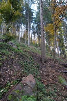 Teilansicht eines steilen, nach rechts abfallenden Waldhanges. Auf den freien Flächen zwischen den Baumstämmen sind größere Steinblöcke verstreut.