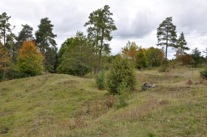 Blick auf einen von trockenem Gras bedeckten Hügel. Der Hügel steigt leicht nach rechts hin an und weist in der Bildmitte eine flache Mulde auf. Am Rand des Hügels wachsen niedrige Laub- und hohe Nadelbäume.
