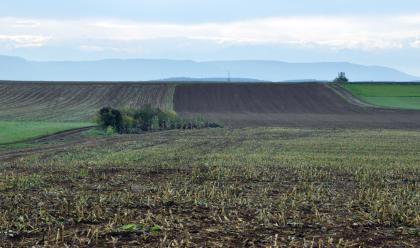 Das Bild zeigt eine wellige Ackerlandschaft. Vorne liegt ein abgeerntetes Maisfeld, in der Bildmitte stehen ein paar Bäume. Auch Fahrwege sind zu sehen. Hinten rechts erhebt sich eine dunkelbraune Ackerfläche, die links von Grasstreifen durchzogen ist.