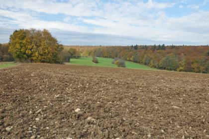 Blick auf einen sehr steinigen, fahlbraunen Acker, an den sich im Hintergrund tiefer gelegene Grünflächen sowie Waldgebiete anschließen.