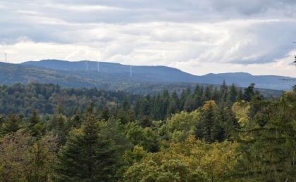 Blick aus großer Höhe über Baumwipfel, Wälder und bewaldete Berge. Im Hintergrund erhebt sich ein bläulich gefärbter Höhenzug. Davor stehen mehrere Windräder.