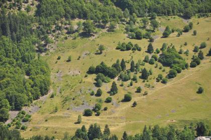 Blick von hoch oben auf blassgrüne Weideflächen, zwischen denen sich einzelne Bäume und Baumgruppen verteilen. Links sowie am oberen und unteren Bildrand umschließt Wald die Weiden.