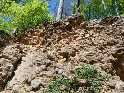 Blick nach oben auf eine Gesteinswand eines alten Steinbruchs. Das anstehende Gestein ist rötlich-braun und konglomeratisch mit vielen Geröllen. Über der Wand wachsen Büsche und Bäume.