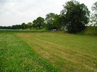 Das Bild zeigt im Vordergrund eine Wiese und ein begrünter Acker, rechts am Rand befindet sich ein Damm, der mit einzelnen Bäumen bewachsen ist.