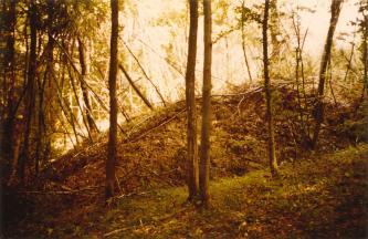 Das Bild zeigt einen länglichen Hügel aus Gesteinsschutt und Erde, zum Teil mit schief stehenden Bäumen bewachsen. Der Hügel liegt in einem Wald auf einer Lichtung.