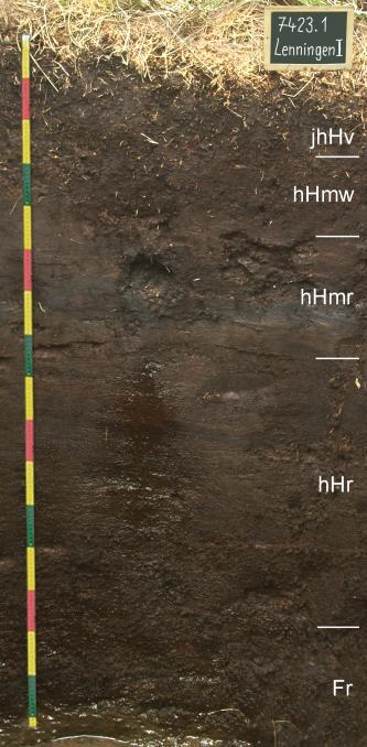 Das Foto zeigt ein Bodenprofil unter Grünland. Das sehr dunkle und durchfeuchtete Profil mit stehendem Wasser am Grund ist 1,60 m tief.