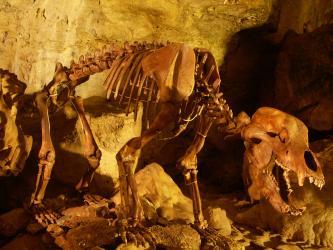 Blick auf das Skelett eines Bären, aufgestellt in einer Höhle. Die Höhlenwände hinter dem Skelett sind bräunlich bis gelblich ausgeleuchtet.