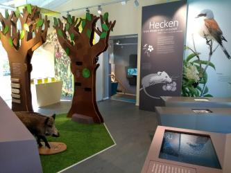 Blick in ein modernes Naturkundemuseum. Ausgestellt sind Schautafeln, stilisierte Bäume und ein präpariertes Tier.