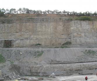 Blick auf eine Steinbruchwand mit grauen, gelblich grauen und braunen Schichten. Die Kuppe ist mit Bäumen bewachsen.