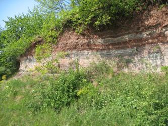 Das Bild zeigt einen von unten und oben mit Büschen eingerahmten Aufschluss aus rötlichem Gestein. Das Gestein steht in dünnen Lagen aus verschieden hellen und dunklen Rottönen an.