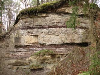 Das Bild zeigt einen Aufschluss im Wald auf teilweise bereits bemoostem, hellbraunem bis rötlichem, bankig anstehendem Sandstein.