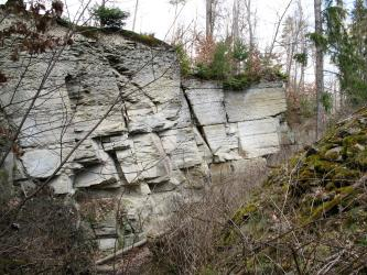 Sandstein-Aufschluss im Wald. Das Gestein ist hell bis mittel grau und steht in verschieden mächtigen Bänken, welche leicht nach links hinten verkippt sind, an. Der Aufschluss ist durch Gehölz eingerahmt.