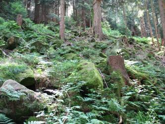 Stark mit Farnen und anderen Pflanzen bewachsene Blockschutthalde im Wald. Zwischen den Blöcken wachsen vereinzelt Bäume.